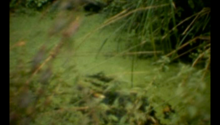 LA TERRE TREMBLE !!! - 'Swamp'